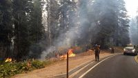 epa04926331 A handout picture made available by the US Forest Service on 12 September 2015 shows fire crews back burning along Highway 180, north of Grant Tree in central California, USA, 11 September 2015. The Rough Fire has grown to 119,0694 acres and