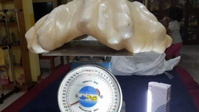 epa05507664 An undated handout photo provided by the Puerto Princesa Tourism Office and released on 23 August 2016 shows a pearl that weighs 34 kilogram and is awaiting to be certified as the biggest in the world, in Puerto Princesa, Palawan island,