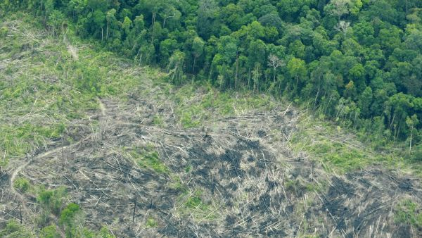 epa03687172 An aerial view shows deforestation in the Tesso Nilo National Park, Riau province, Indonesia, 04 May 2013. According to Greenpeace, the forest inside the national park should be legally protected, and calls the Indonesian government to be more