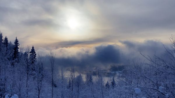 epa02478204 A mystical winter mood scene is seen at Sollihoegda, near the Norwegian capital Oslo, on 03 December 2010. It has in the past few days been very cold in many parts of the country and it is reported that these temperatures will continue in the